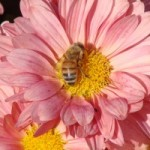 the_bee_and_the_flower_204010